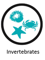 invertebrates_icon