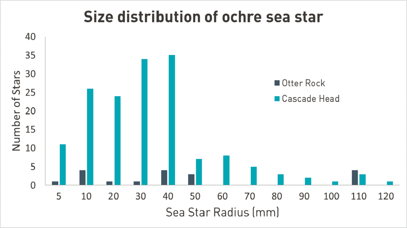 Graph of sea star survey results