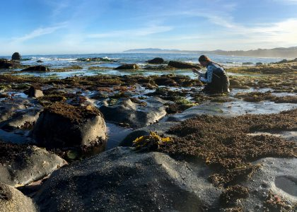 Heather Fulton studies interactions between seaweeds and invertebrates
