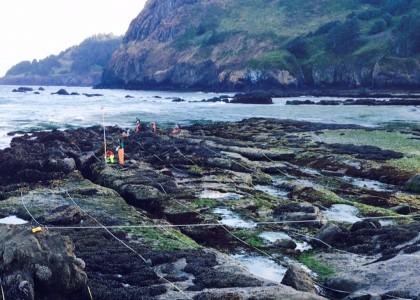 Scientists conducting rocky intertidal monitoring