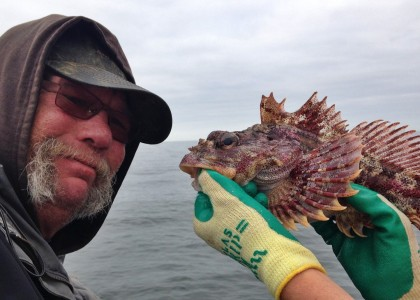 Red Irish lord fish caught during hook-and-line survey
