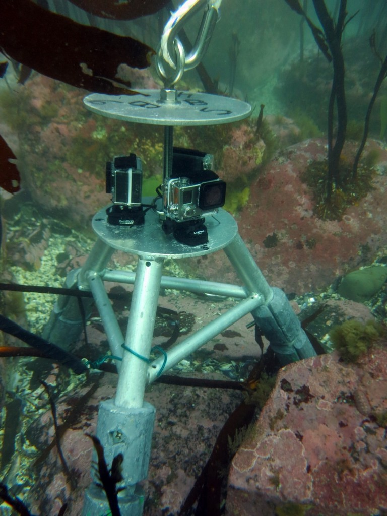 Video lander underwater sitting on seafloor.