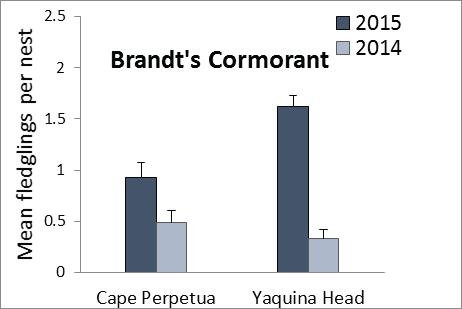 Brandts Cormorant Fledging Success