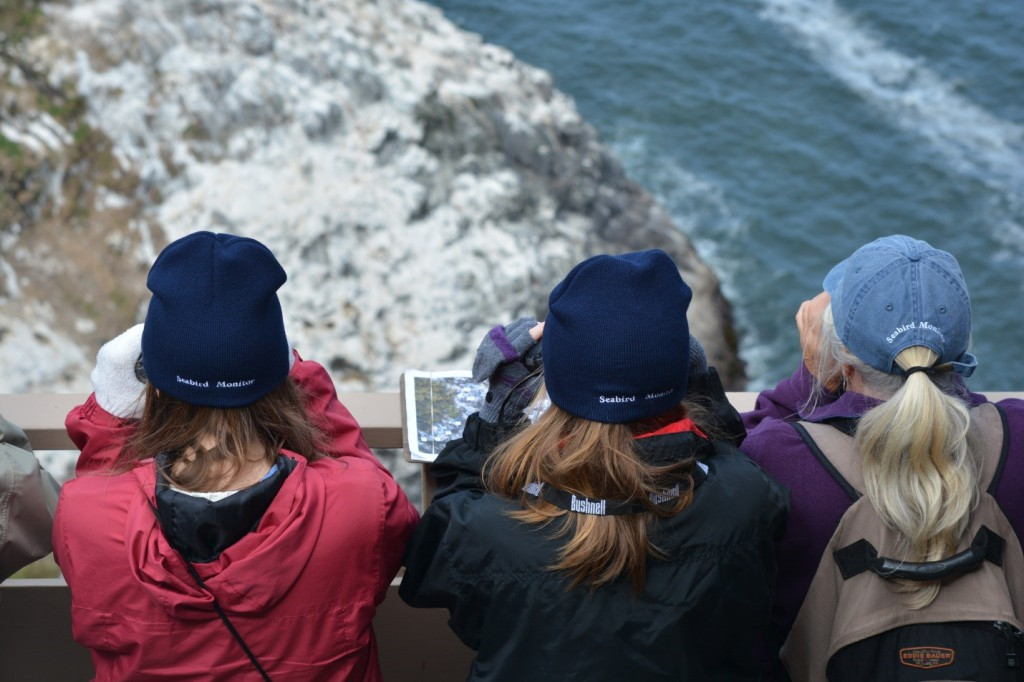 Seabird monitors viewing a colony at Sea Lion Caves (Photo: Amelia O'Connor).