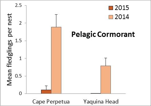 Pelagic Cormorant Fledging Success