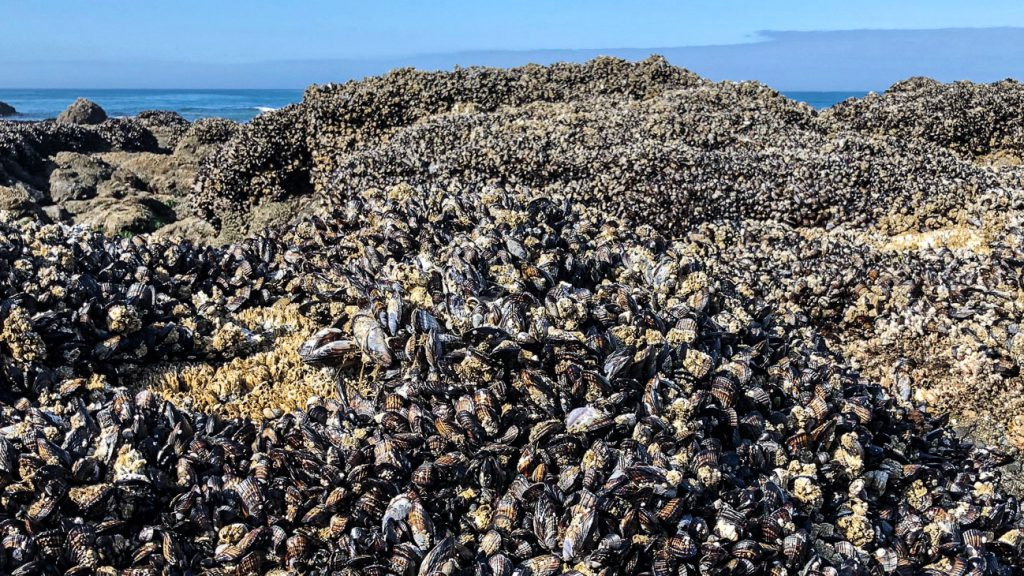 Mussels create structure and habitat for other species.